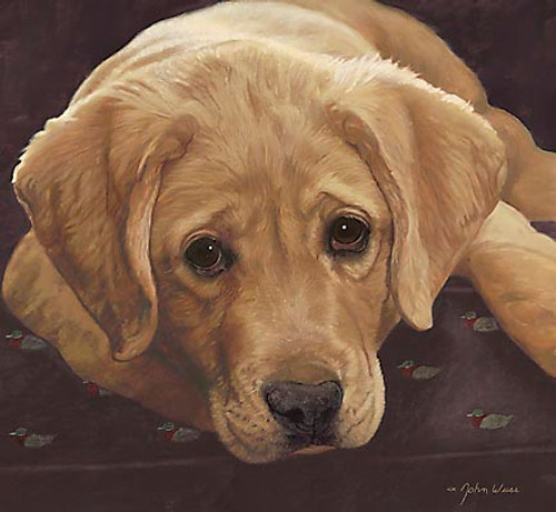 BEST LOVED BREEDS: YELLOW LABRADOR RETRIEVER, John Weiss L.E.CANVAS