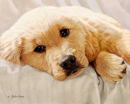 BEST LOVED BREEDS: GOLDEN RETRIEVER, John Weiss LIMITED EDITION PRINT