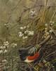 RufousTowhee SONGBIRD TRIO by Robert Bateman