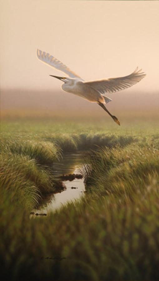 Across the Marsh - Snowy Egret by Richard Clifton