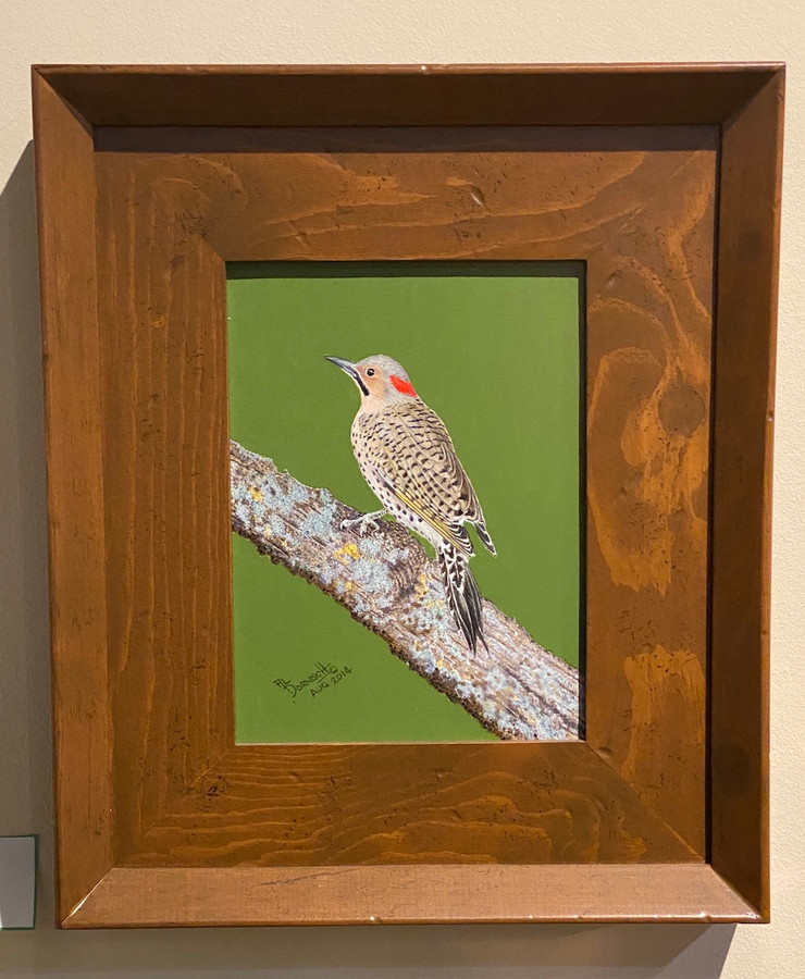 Northern Flicker painting