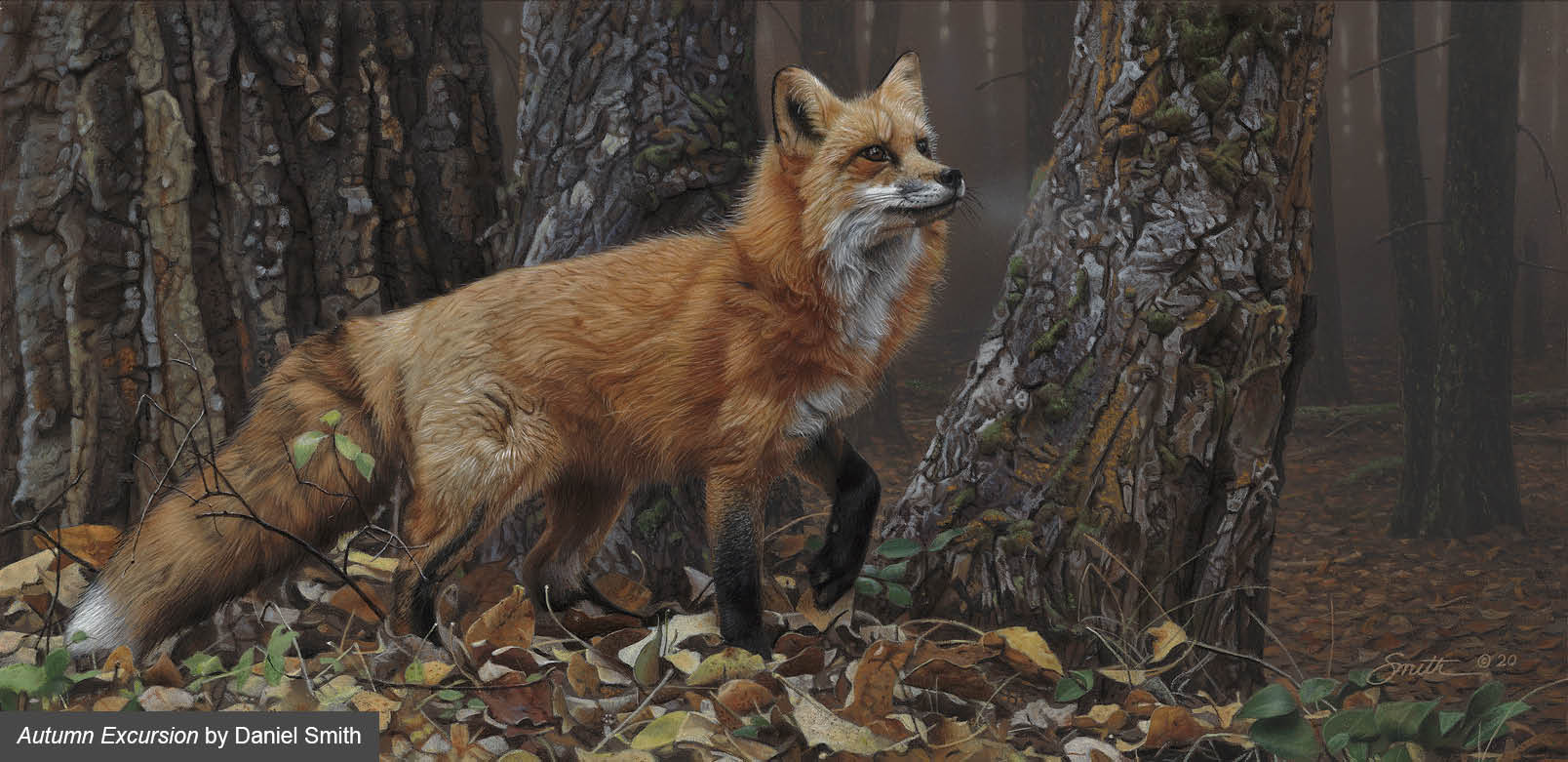 An awesome painting of a Red Fox by Daniel Smith wildlife artist