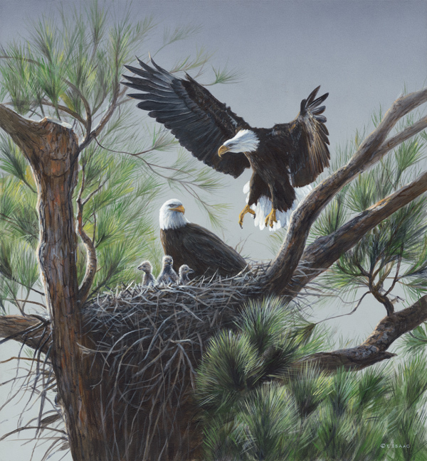eagles-nest-37302.1440542110.jpg