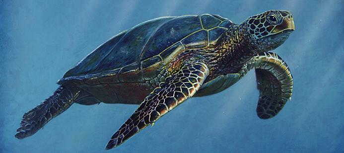 turtlebab-dg00010.jpg