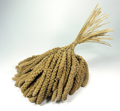 10inch Natural Millet Sprays. Large bundle