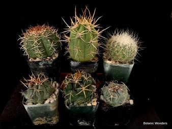 6 Plants, one price!