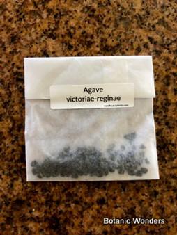 Agave victoriae-reginae seeds 100 count