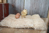 Duncans Poultry Excelsior Nesting Pads - 6 Pack
