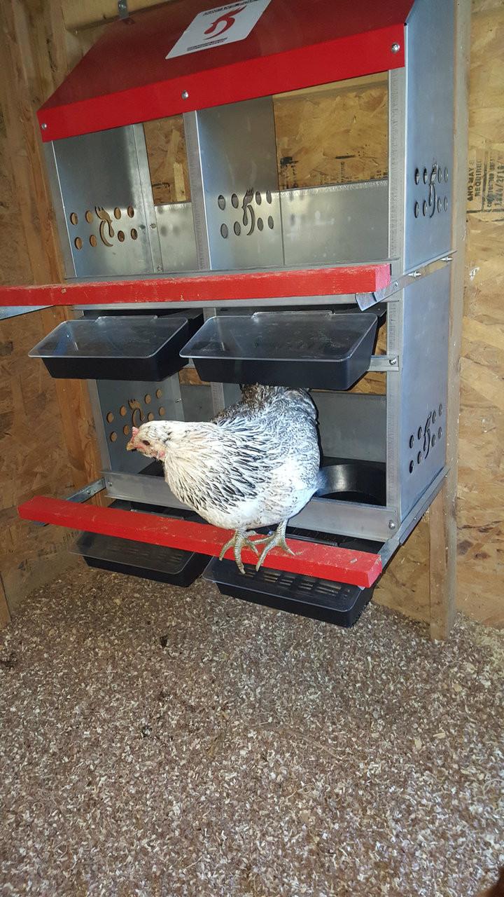 Duncan's Poultry 4 Hole Rollout Nest