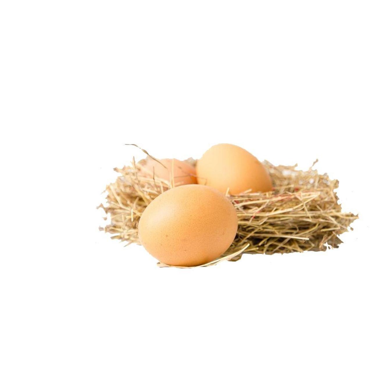 1 Dozen Brown Ceramic Nest Eggs in Grade A Large Carton