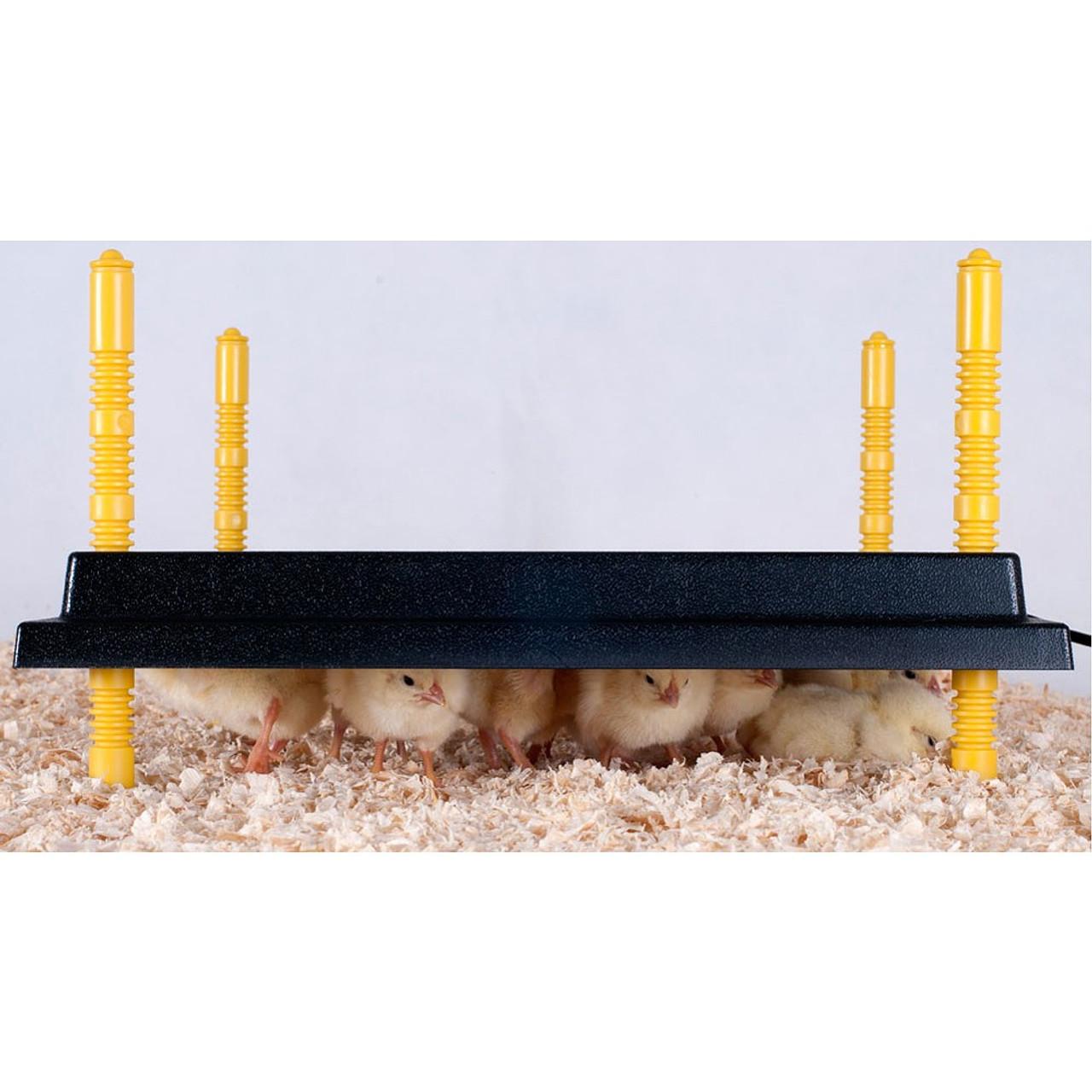 "Comfort Plate Brooder Heating Plate - 16""X24"""