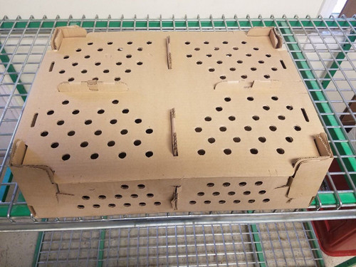 Chick Shipping Boxes 100 Count Box - Bundle of 5