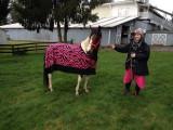 Flower modeling her new pink zebra cooler