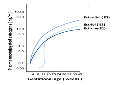 estriol-levels-and-pregnancy-chart.jpg