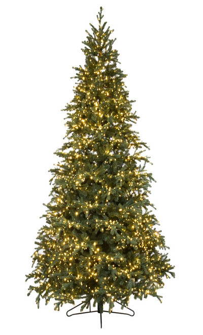 12'  Slim Carolina Fraser Fir Christmas Tree