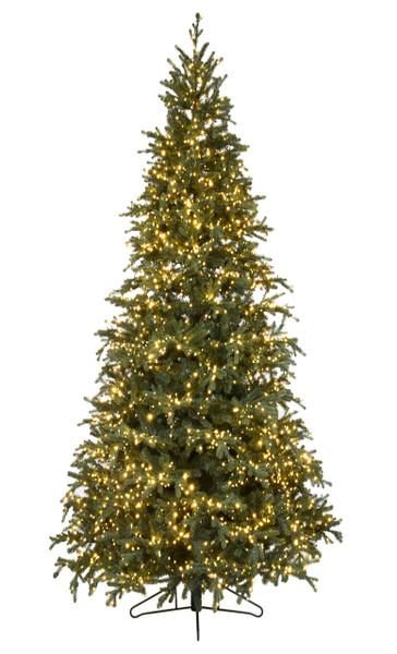12'  Slim Carolina Fraser Fir Christmas Tree
