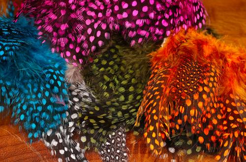 UV2 Large Eyed Guinea Feathers