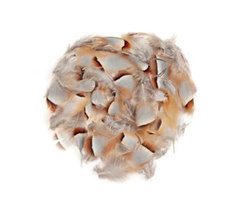 Chukar Feathers Loose