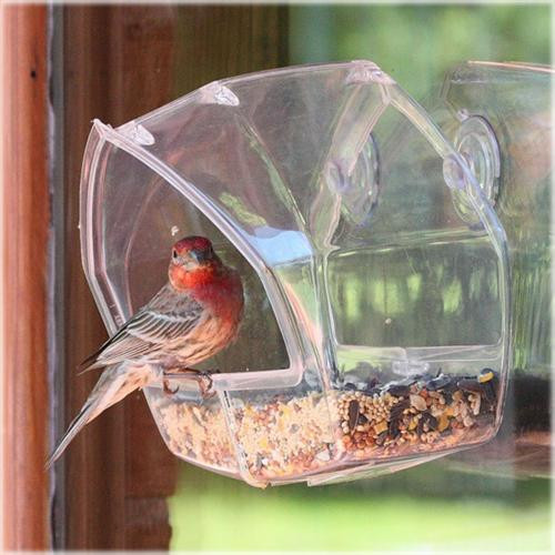 Birdscapes Wild Bird Window Feeder Pery Pet 348