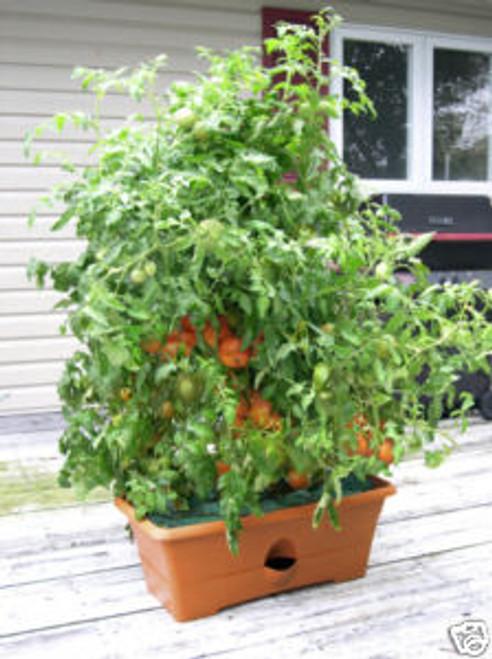 Garden Patch Grow Box   Terra Cotta Color