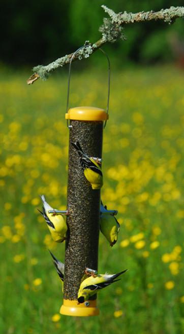 """Droll Yankees Bird Lovers Bottoms Up Finch Feeder 15"""""""