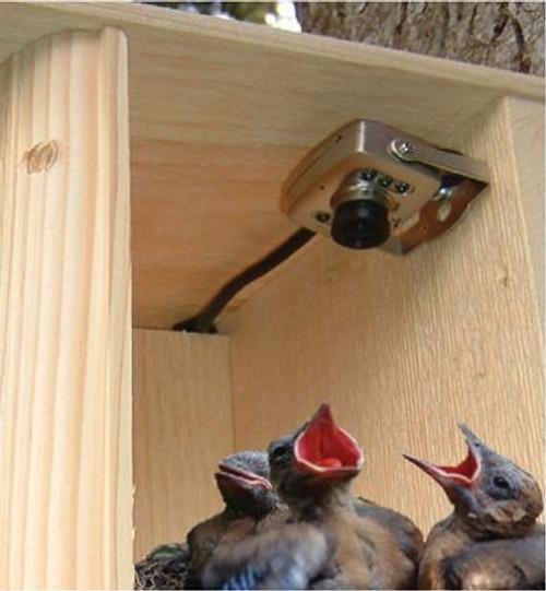 Hawk Eye Nature Video Camera & Microphone w/ 75' AV Cable BCAMHEHD