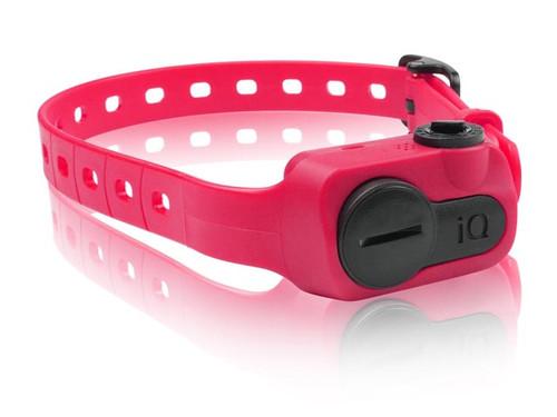 Dogtra iQ Bark Collar Pink