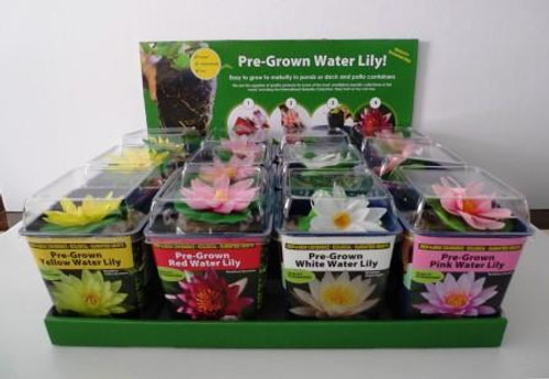 Plantabbs 12 Pack Pre Rooted Red,Pink, Yellow and White Hardy Water Lily Ready Plant Drop -N-Grow