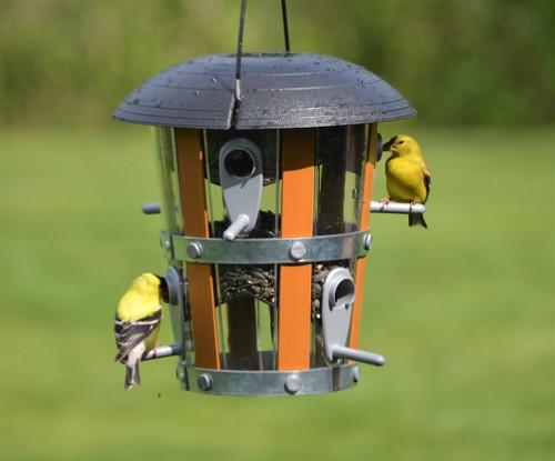 Nature's Way Decorative Lantern Feeder NWDF1