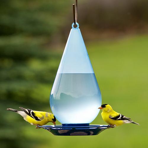 Perky Pet Water Droplet Bird Waterer 781