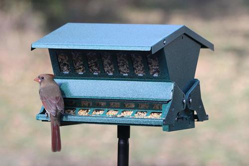 Woodlink  Absolute Feed & Seed Squirrel Resistant Bird Feeder 24640