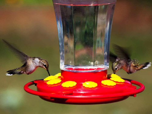 First Nature 3090 32 oz. Hummingbird Flower Feeder 10 Nector Feeding Ports Made In USA (FN3090)
