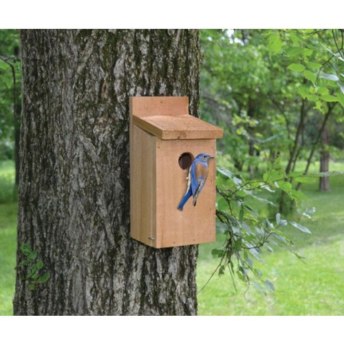 Songbird Essentials Cedar Bluebird Birdhouse SETC101