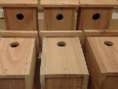 6 PACK Cedar Bluebird Bird house