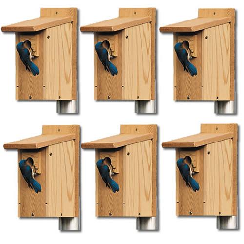 6 PACK Cedar Bluebird House With Predator Guards With Locking Front Door (HIATT38078)