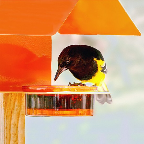 Couroone Metal & Glass Bright Orange Colored Bird Feeder 447200O