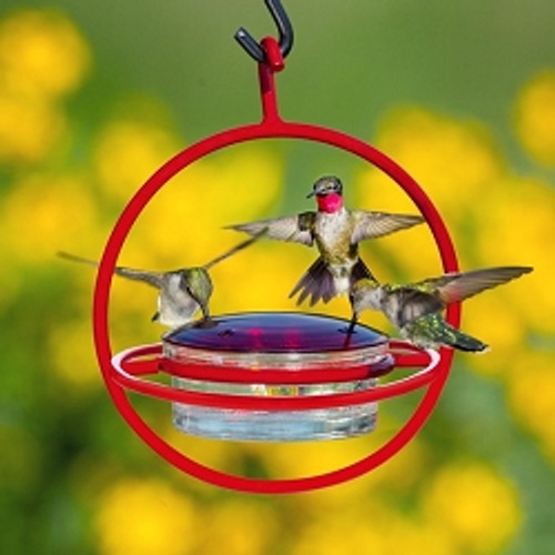 Couronne Co Red Hanging Sphere Hummingbird Feeder with Perch COURM047301R