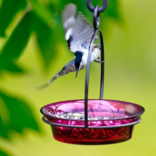 Couronne Co Fuchsia Cuban Bowl Hanging Birdbath and Bird Feeder COURM33720007