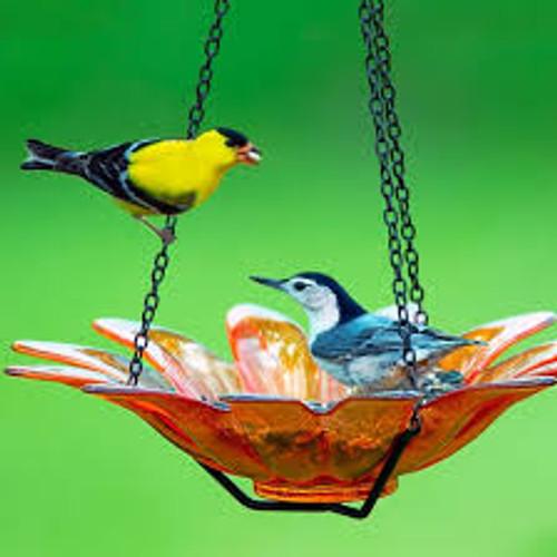 Couronne Co Orange Hanging Daisy Birdbath and Bird Feeder COURM34920008
