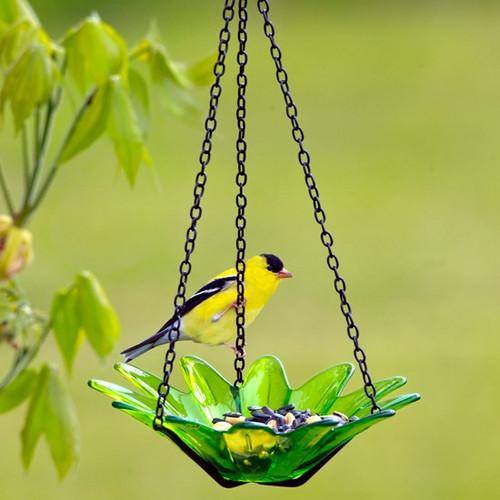Couronne Co Lime Hanging 8 inch Daisy Birdbath and Bird Feeder COURM35320001