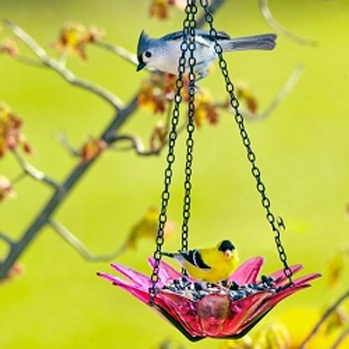 Couronne Co Fuchsia Hanging 8 inch Daisy Birdbath and Bird Feeder COURM35320007