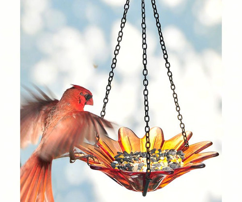 Couronne Co Orange Hanging 8 inch Daisy Birdbath and Bird Feeder COURM35320008