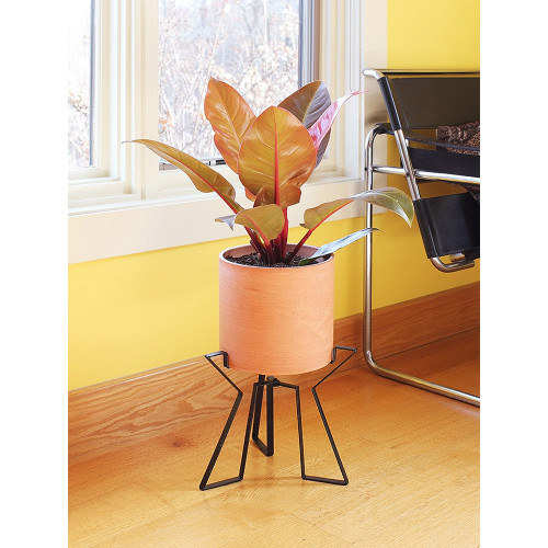 Achla Solaria Collection Designs Florence 8 inch Planter