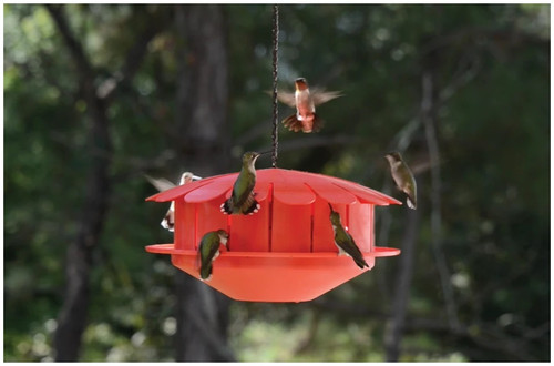 Humm-Bug Hummingbird Protien Feeder NO Nector Feeder