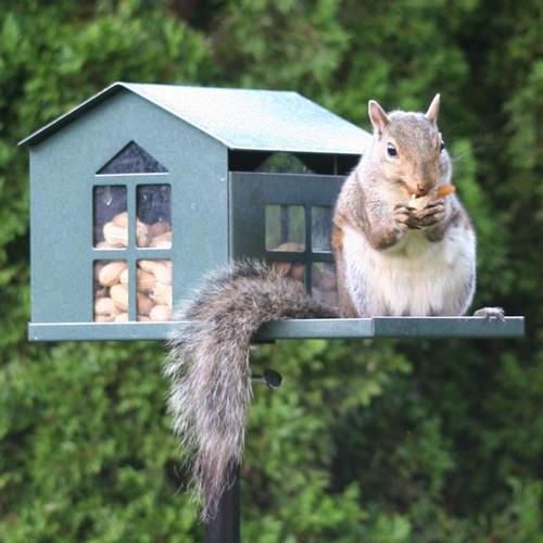 Bird Proof Squirrel Feeder SQF1G