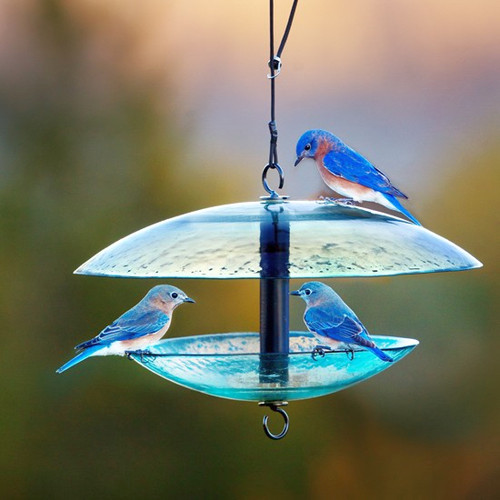Couronne Clear Glass Bird Feeder With Weather Baffle Dome CM380200