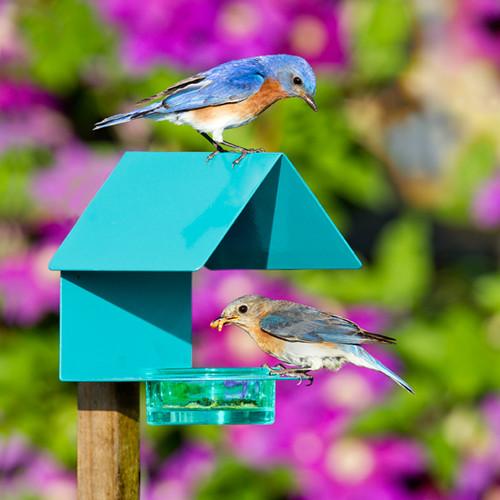 Couronne Fence / Post Metal & Glass House Bird Feeder Aqua 447200A