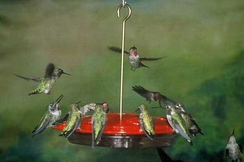 Aspects 143 Hummzinger Excel 16 oz Hanging Hummingbird Feeder ASPECTS143