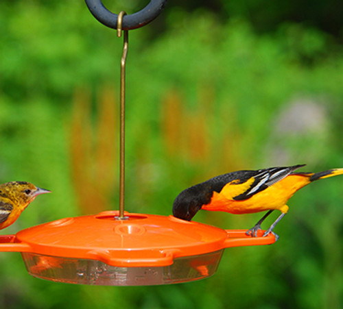 Aspects 361 Oriole Bird Feeder ASPECTS361