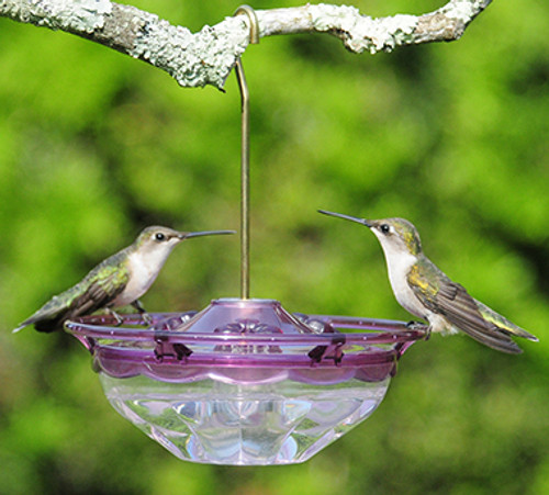 Aspects 434 HummBlossom 4 oz Hanging Plum Hummingbird Feeder ASPECTS434